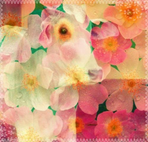 Taurus Bull Danielle Winter Pink Flower Petals