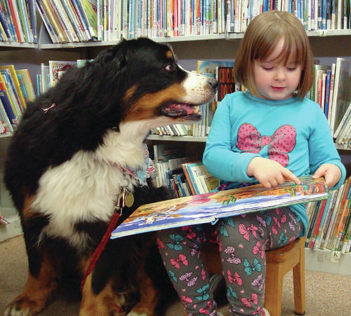 Virgo Pets Service Dog Bermese Child Library Reading
